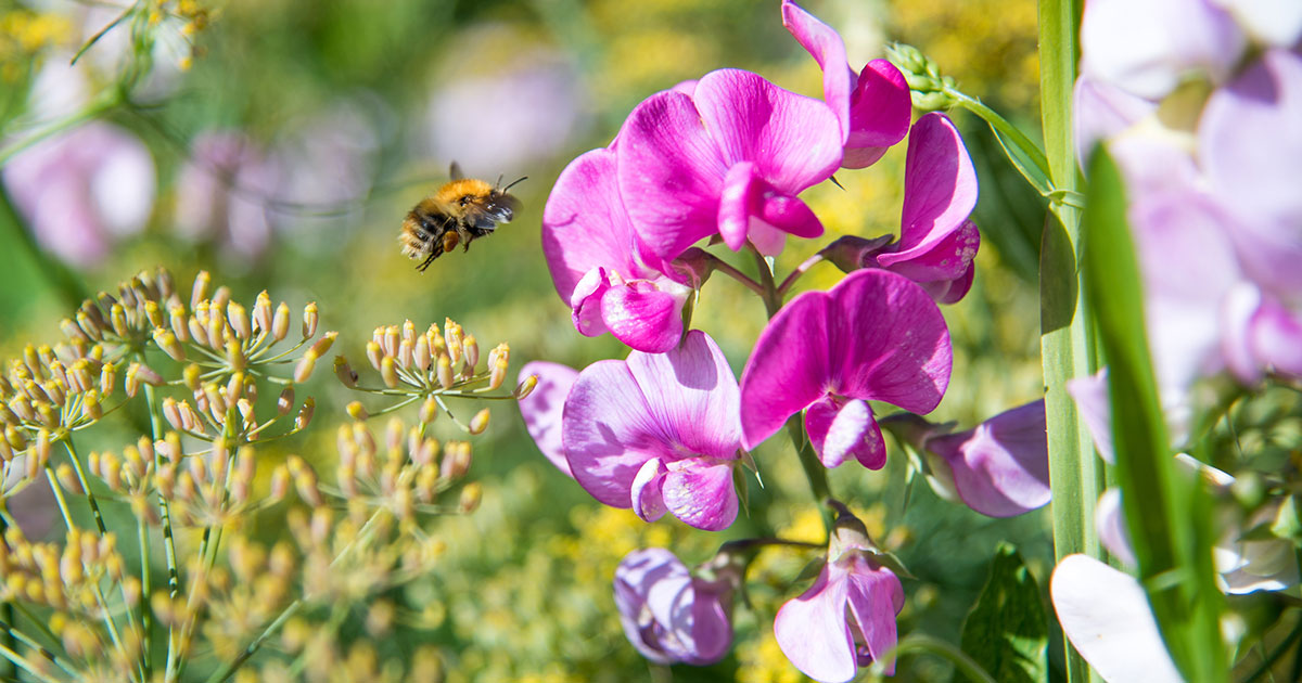 How To Attract Bees To Your Garden - Montagu Arms