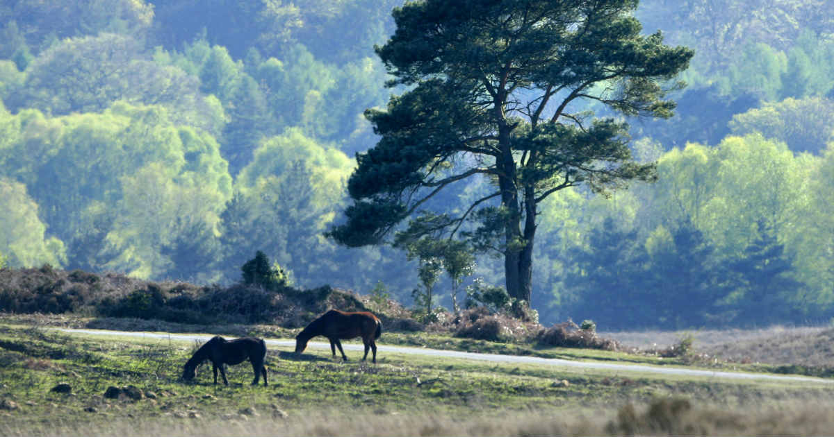5 Places to Visit in the New Forest Part 3 | Montagu Arms