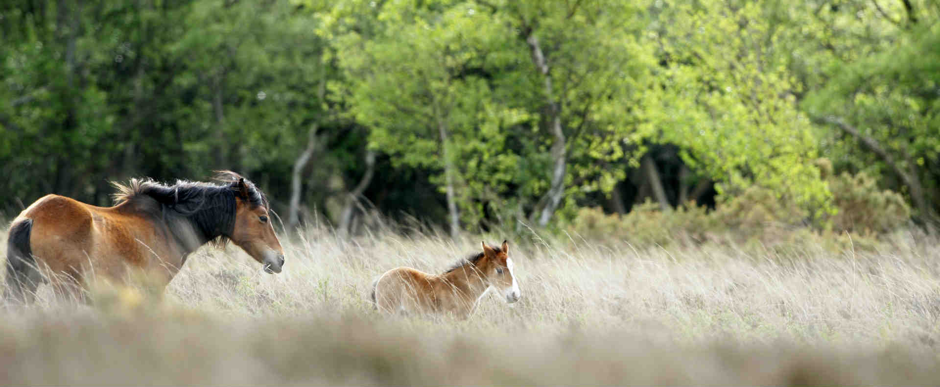 The New Forest: The Ideal 'Staycation' This Summer1