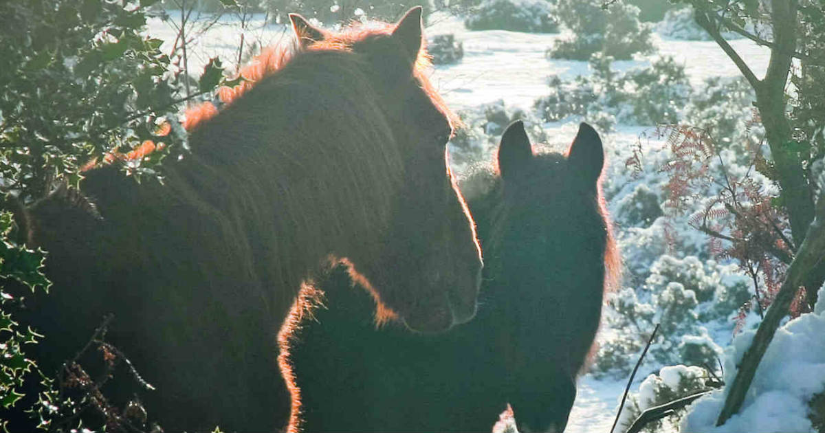 Enjoy A Winter Walk In The New Forest