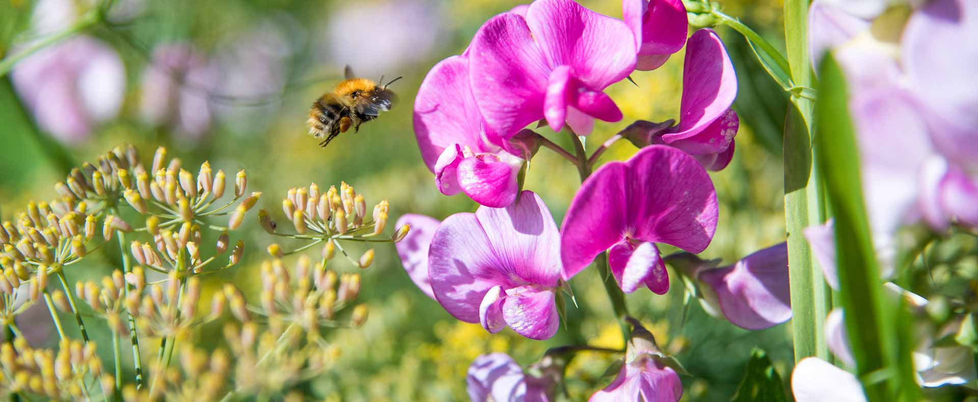 How To Attract Bees To Your Garden | Montagu Arms Blog
