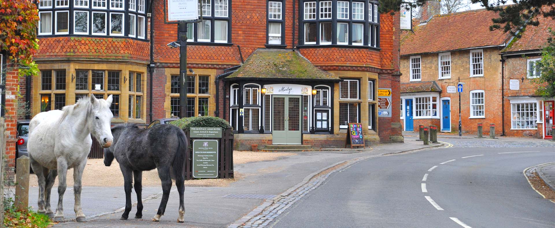Monty's Inn | The New Forest
